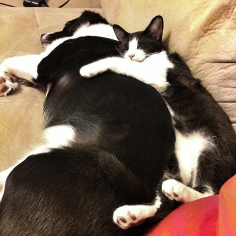 dogs-cats-lifestyle-6