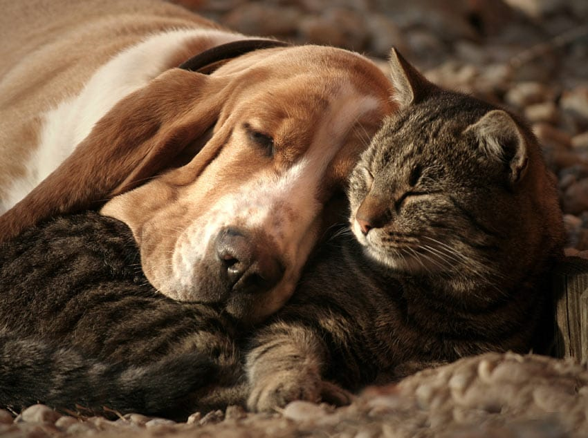 dogs-cats-lifestyle-7