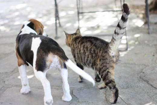 dogs-cats-lifestyle-8