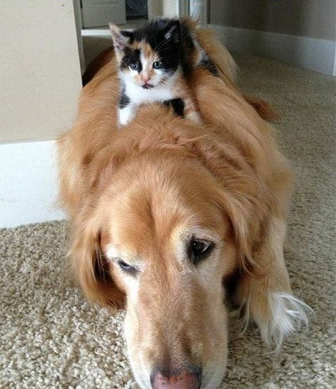 dogs-cats-lifestyle-9