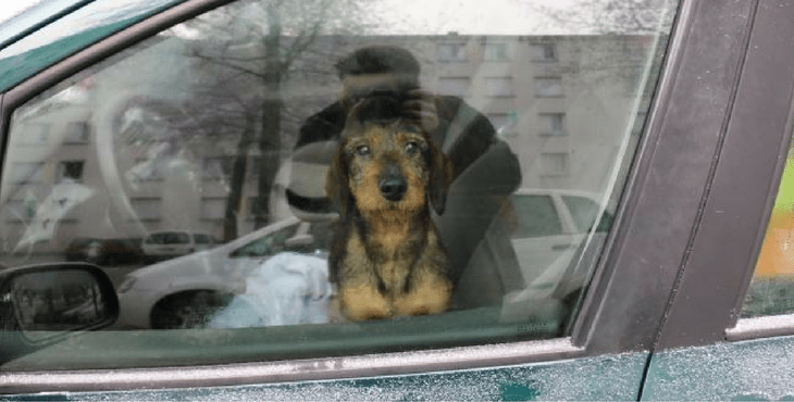 dogs_france_car_cover