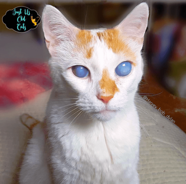 best cat food for older cats reviews
