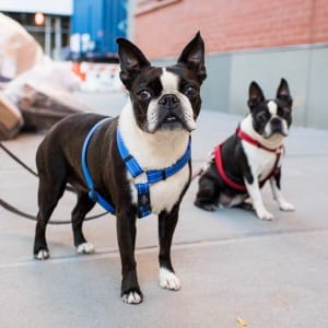 dogs-attention-lifestyle-8