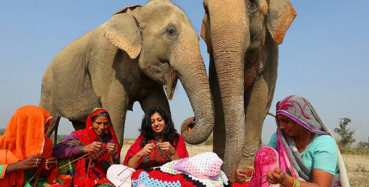 1fe350ad1d7b These Women Are Knitting Massive Wool Sweaters For Rescued Elephants