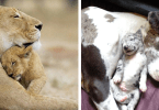mamans-petits-animaux-chiens-1