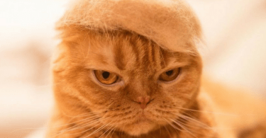 cat_fur_hats_photorgapher_cover