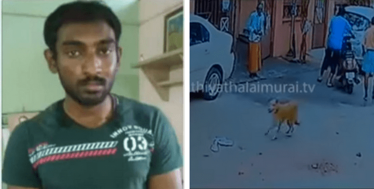 These Two Stray Dogs Helped Capture A Criminal In The Streets