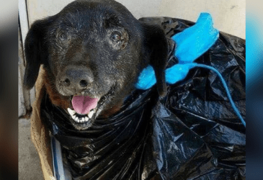 blackie-abandoned-trash-bag-cover
