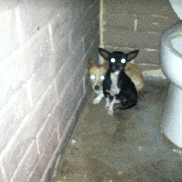 Two Puppies Forced To Live In A Public Restroom Finally