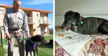 greyhound-retirement-home-cover