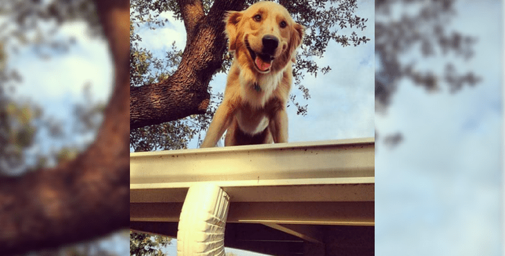 huc_the_roof_dog_cover