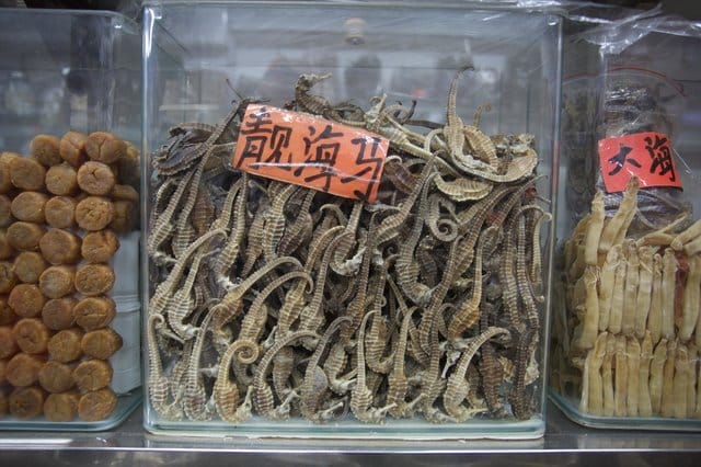 seahorses_medicine_shops_china_1