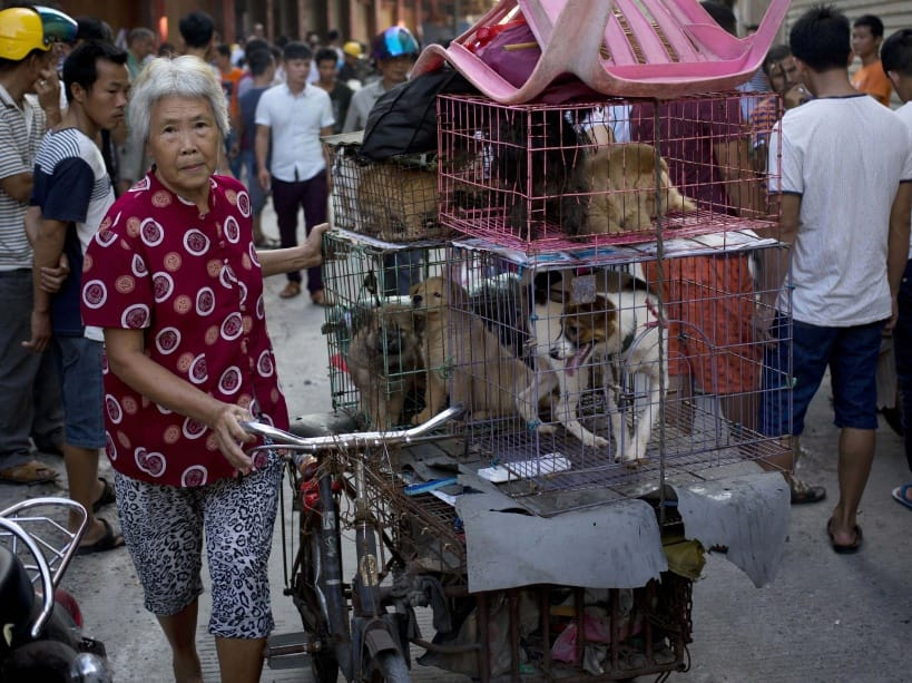 Dog meat to be banned from controversial Yulin festival