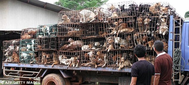 yulin_dog_meat_ban_2