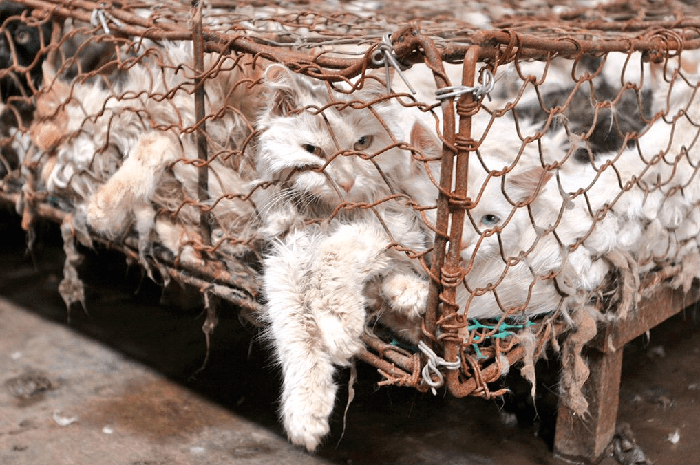 Activists Claim China Is Taking The 'Dog' Out Of Dog Meat Festival