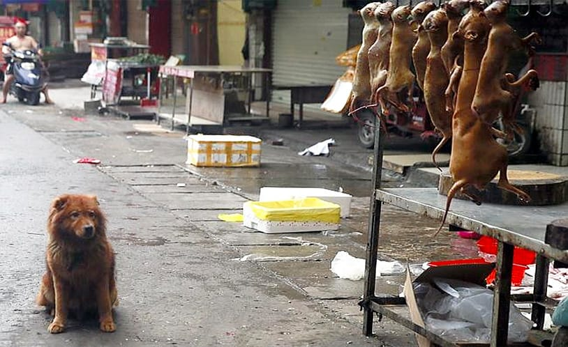 Dog meat to be banned from annual festival in China