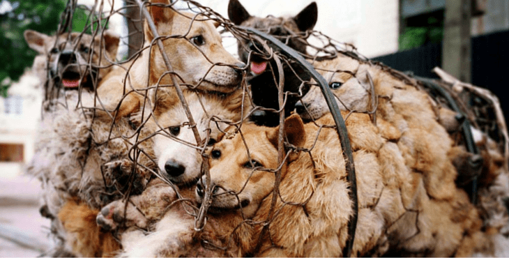China's Yulin Festival Banned from Selling Dog Meat