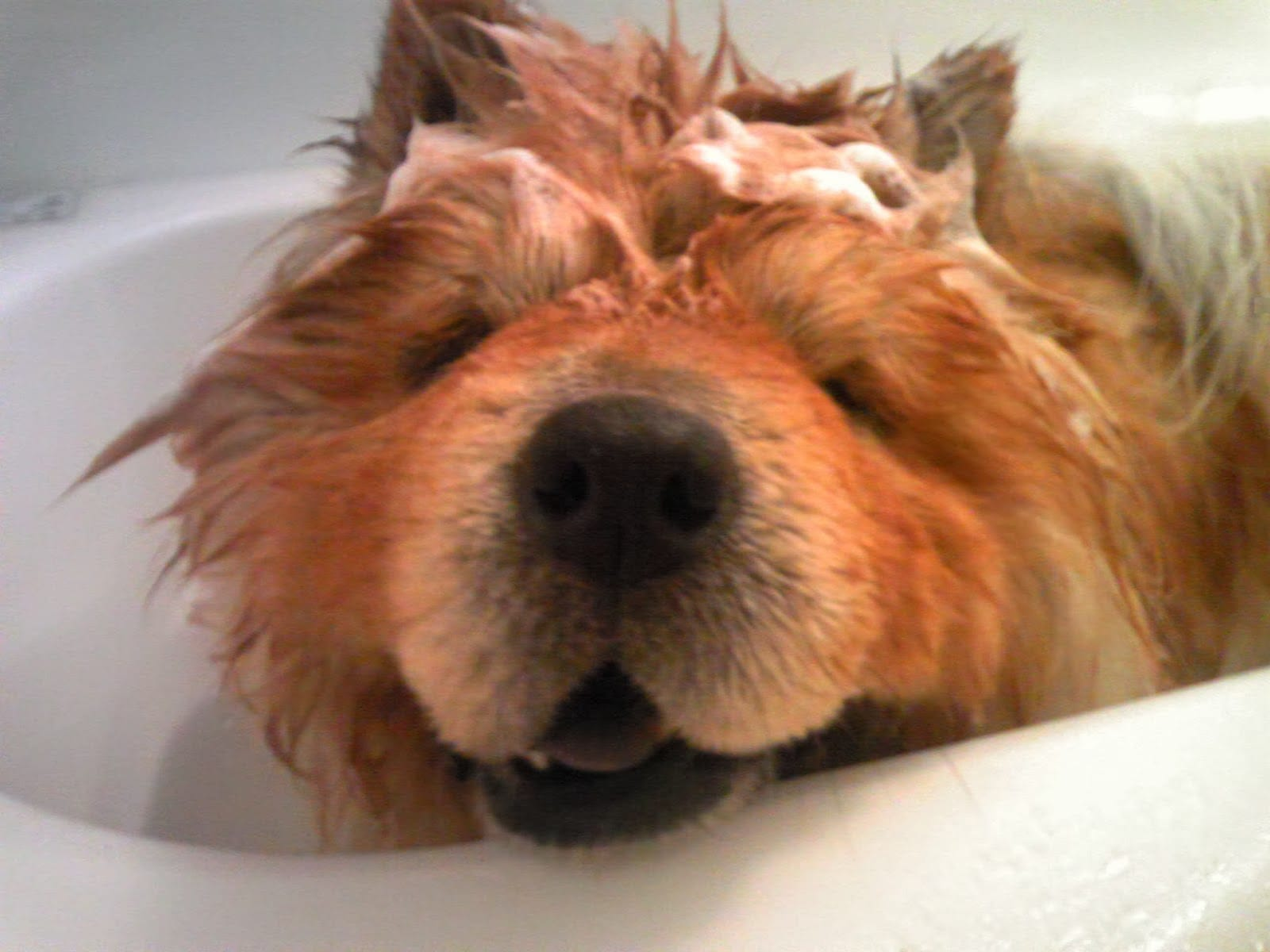 What Human Shampoo Can You Use On Dogs