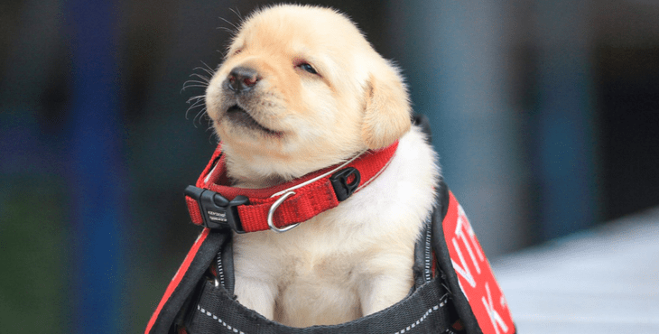 the photos of this police force s newest and cutest puppy recruits
