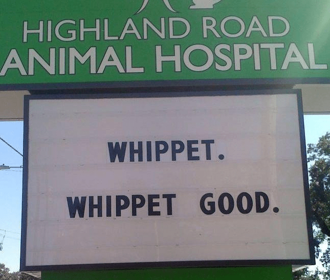 11 Brilliant Veterinary Clinic Signs That Will Make You