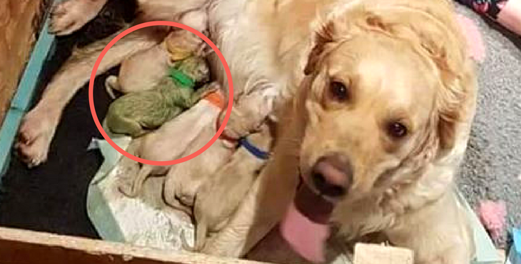mama dog gives birth to litter of puppies with one big surprise