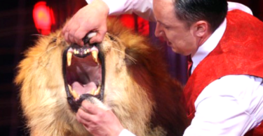 scotland bans animals in circuses
