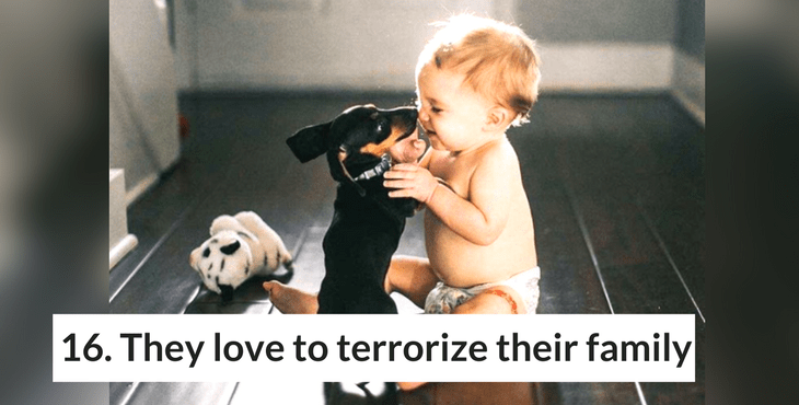 19 Reasons To Never Adopt A Dachshund | HolidogTimes