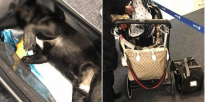 United Airlines accidentally puts ANOTHER dog on the wrong flight