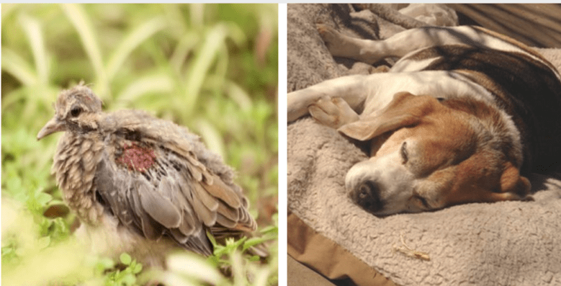Dead Or Injured Animal: How To React | HolidogTimes