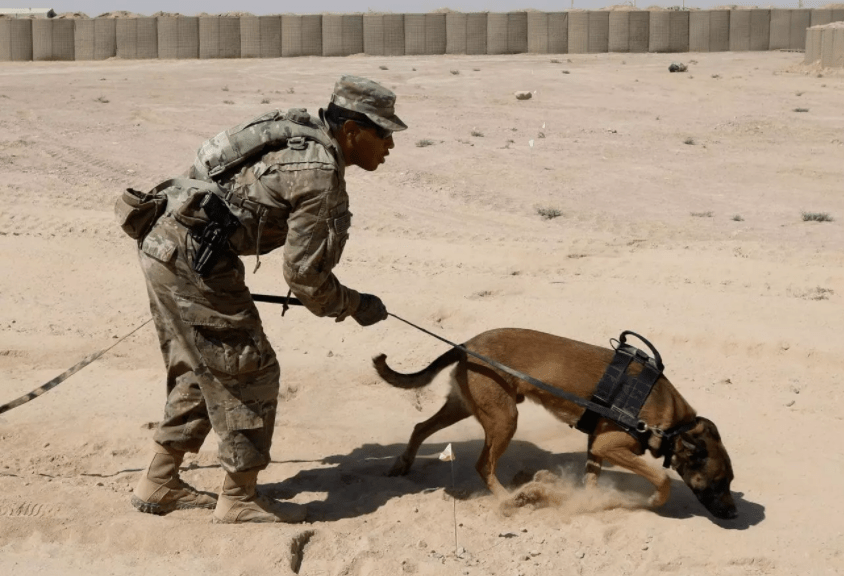 Beautiful Afghanistan Army Adorable Dog - army-dogs-mistreated-2  Graphic_662325  .png?2e4e73\u00262e4e73