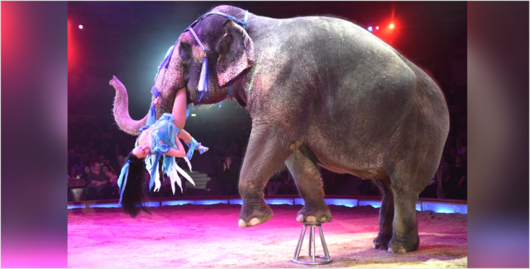 should we ban keeping of animals in circus Prohibiting the exploitation of animals for entertainment by circuses several us cities have an outright ban on animal acts and dozens of but we have not.