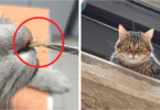 spring-time dangers for cats