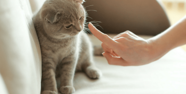 How Should You Punish Your Cat Or Kitten?