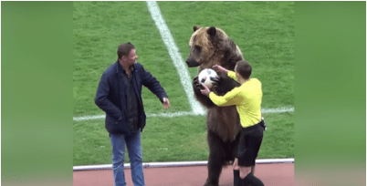 Bear Used To Deliver Match Ball In Russian Football Game, Angering Animal Welfare Groups
