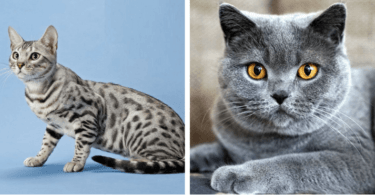Cats with good health