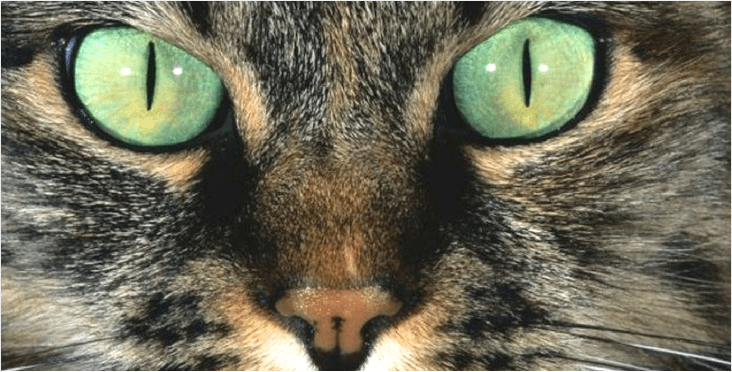 Cat Anatomy Discover Your Cats Body Holidogtimes