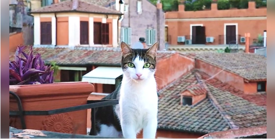 Meet The Cats Who Rule Rome