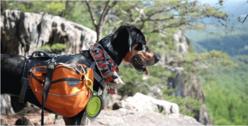 dog-hiking-advice-1