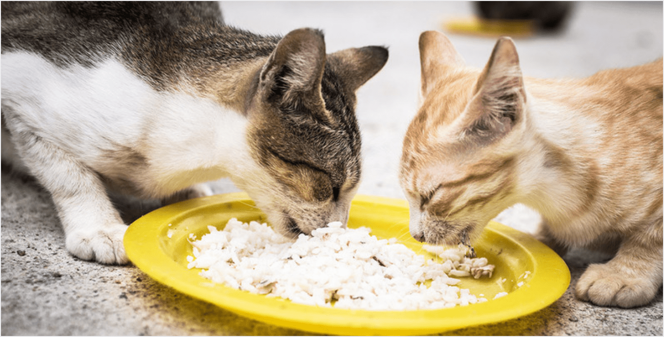 Giving Rice To Cats