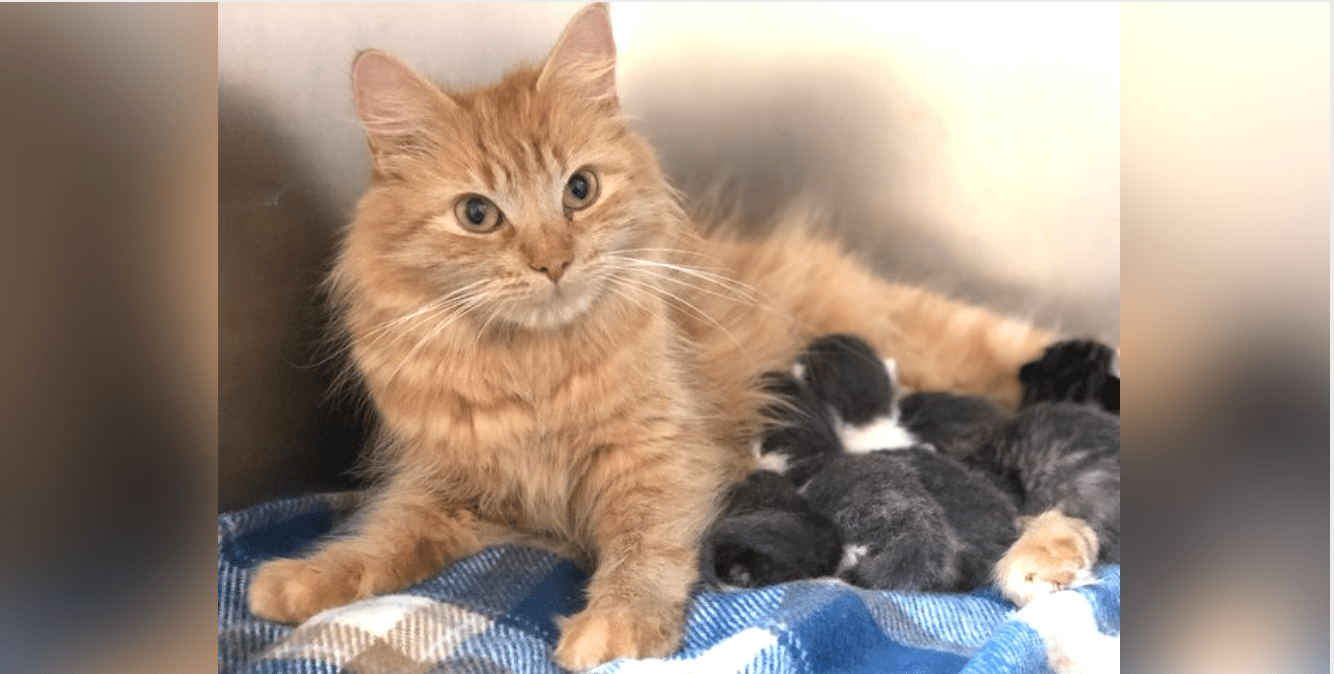 Stray Cat Helps To Raise Five Newborn Kittens After Their Mom Gets Sick