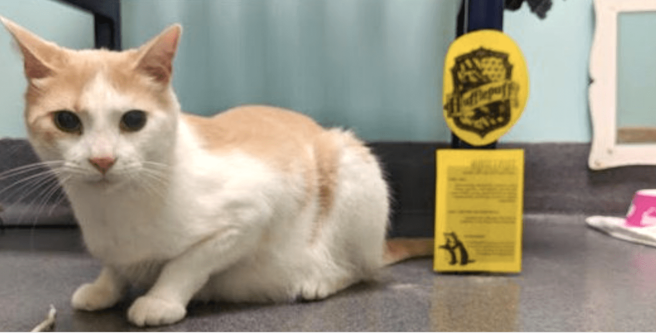 Blind Shelter Cat Is Read 'Harry Potter' Every Day Until He Learns To Trust People